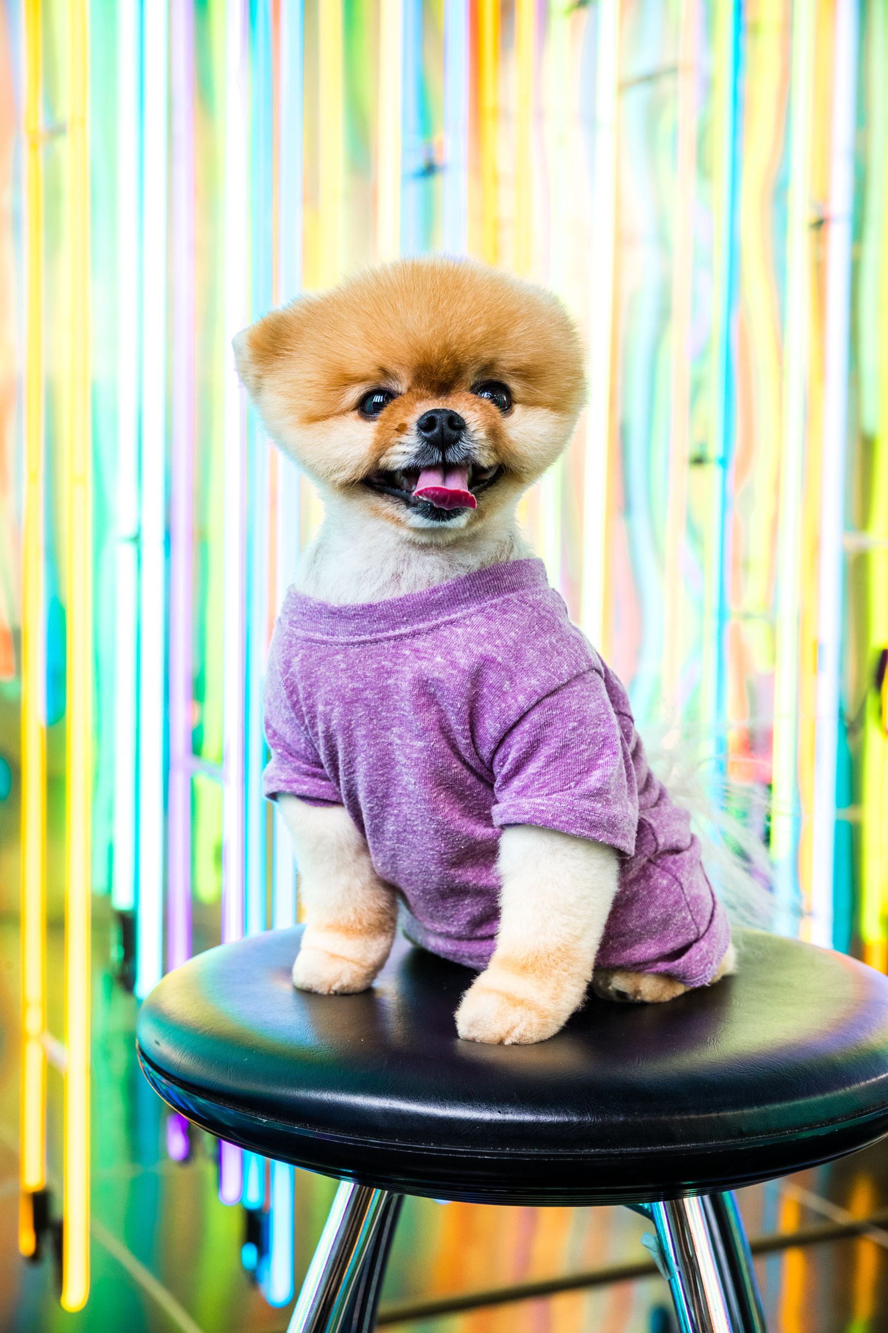 016_1111_Jiffpom_Photos_by_marcroyce_v1